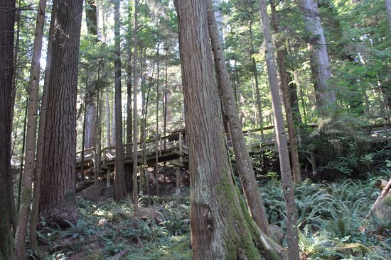 North Vancouver, Kanada: beautiful rain forest, large, very old trees...