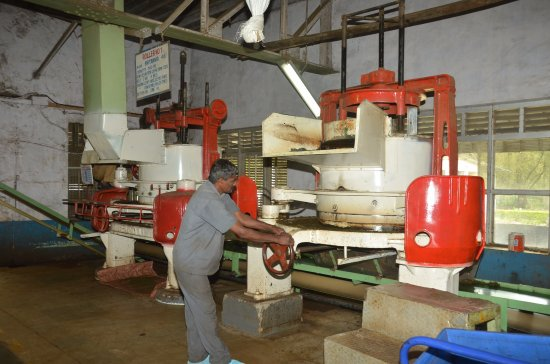 Devikulam, India: Rolling process at Lockhart Tea Factory Munnar