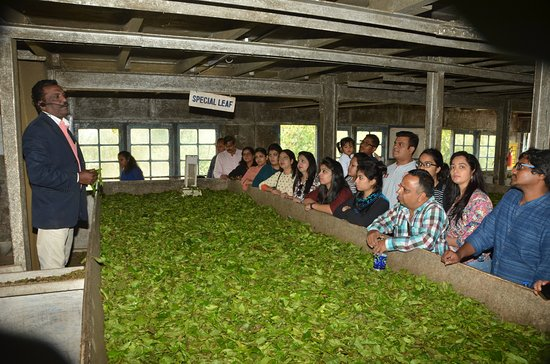 Devikulam, India: Experts briefing about Orthodox Tea