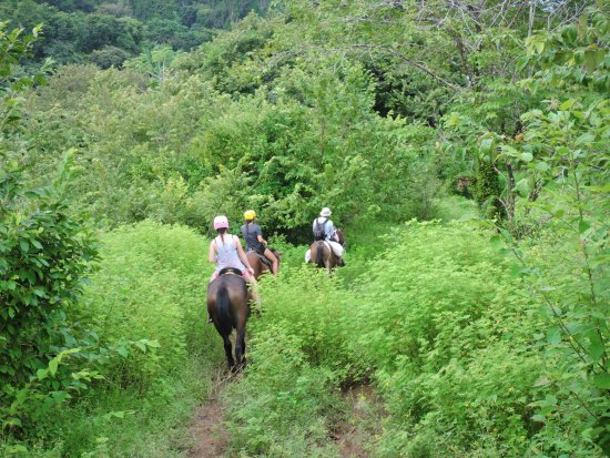 Rancho Tropical: Take a tour during the green season