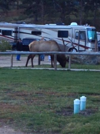 Spruce Lake RV Park: Morning visitor to the park!