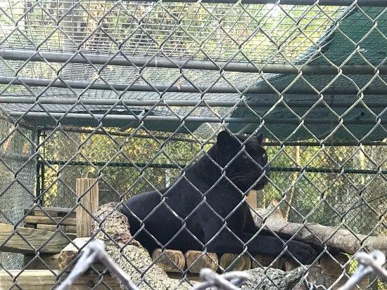 Catty Shack Ranch Wildlife Sanctuary: photo2.jpg