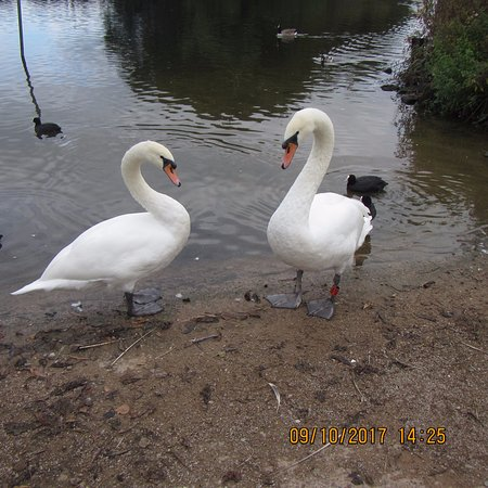Ellesmere, UK: waiting for food