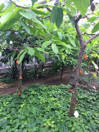 Gewächshaus für tropische Nutzpflanzen
