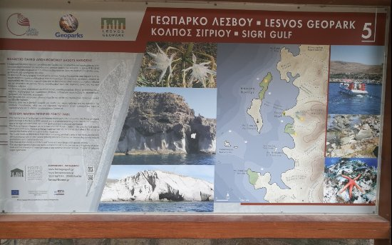 Petrified Forest of Lesbos : Γεωπαρκο Λέσβου