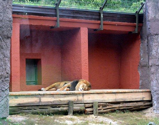 Ueckermunde, Germany: A lew tylko spał i spał...