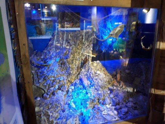 Deniz Biyolojisi Muzesi