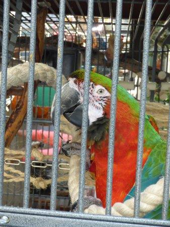 Merced, CA: Perroquet du magasin