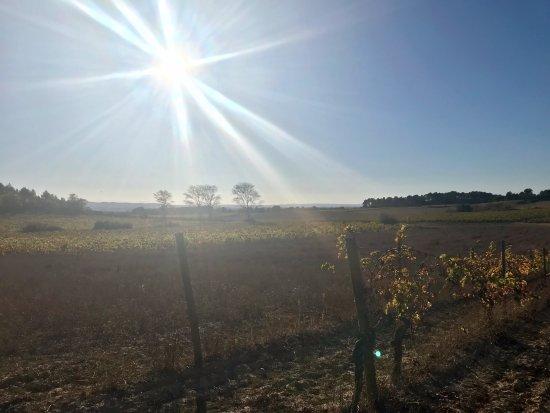 Villemoustaussou, Francja: A beautiful evening sun over the vineyard.
