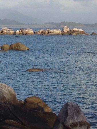 Bedarra Island, Australia: photo6.jpg