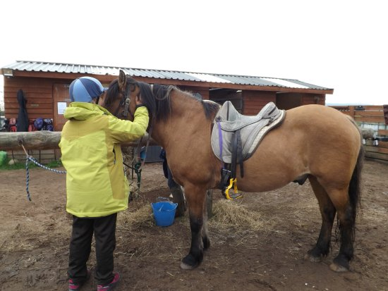 Tain, UK: forgot his name ???!! Sorry!! Sweet 25 years old gelding