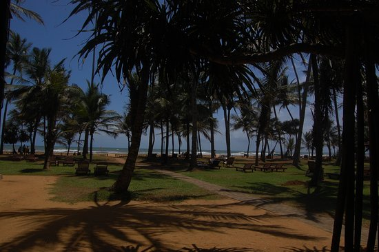 Hotel Mermaid & Club: View from Sunbed/pool area