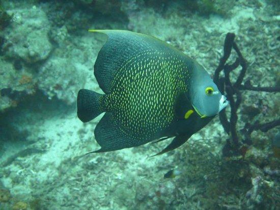 Scuba Steve's Diving Ltd. : and another little fish!