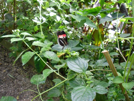 Buckfastleigh, UK: Butterfly