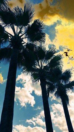 Hotel Marbella-billede
