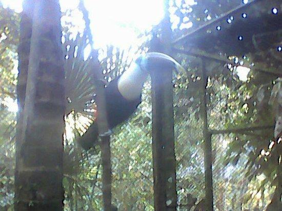 Jungle Tour Iquitos