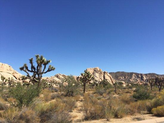 Twentynine Palms, CA: photo3.jpg