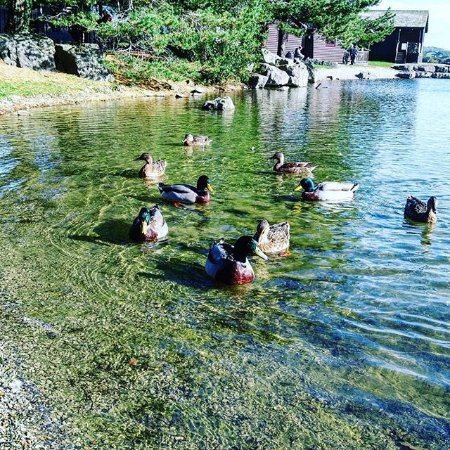 Carnforth, UK: Photo of the ducks on the lake