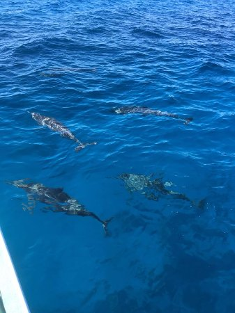 Kawaihae, Hawái: dolphins swimming right next to us!