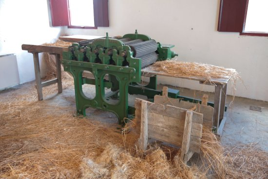 Letterkenny, Irlande : Mechanised breaking the flax