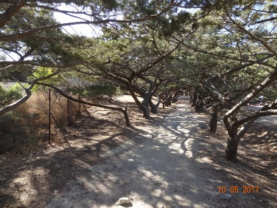 Filerimos, Greece: arbres de formes bizarres