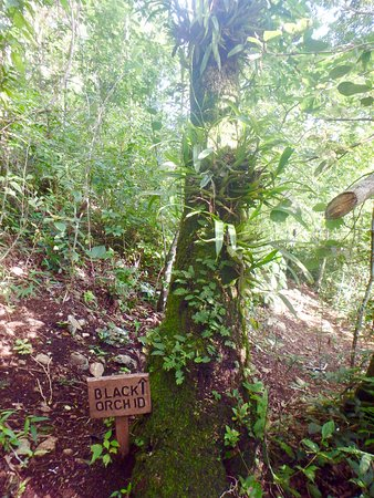 San Antonio, Belize: Well marked hiking trail on grounds