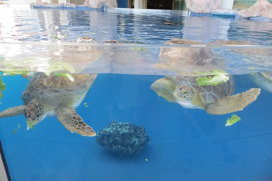 Texas State Aquarium (Corpus Christi): Top Tips Before You ...