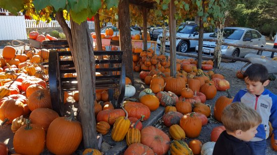 Mill View Ranch: Pick your favorite pumpkin