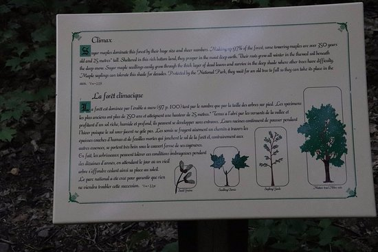Pleasant Bay, Canada: About trees