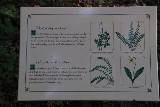 Pleasant Bay, Canada: About the plants