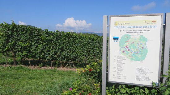 Longuich, Alemania: Grapes have been cultivated for 2000 years