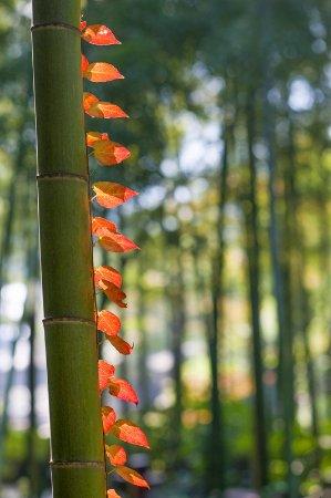 Yixing, China: Bamboo Park