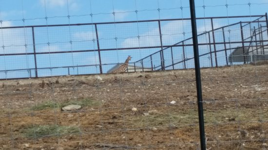 Branson's Promised Land Zoo