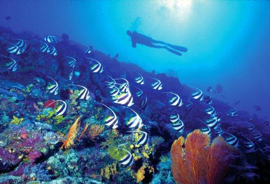 Sheraton Denarau Villas: Scuba diving