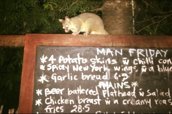 Man Friday: Possum on the menu.