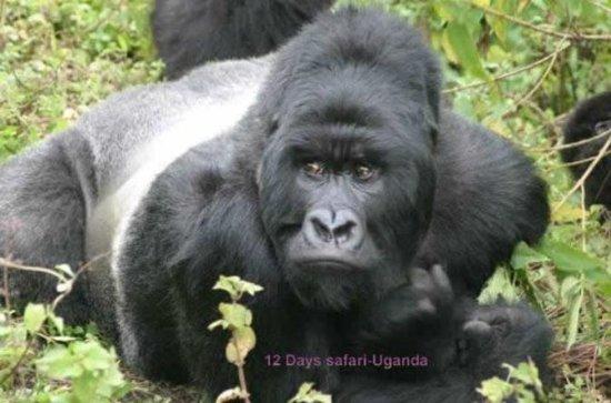 12 Days All Inclusive Uganda Tour