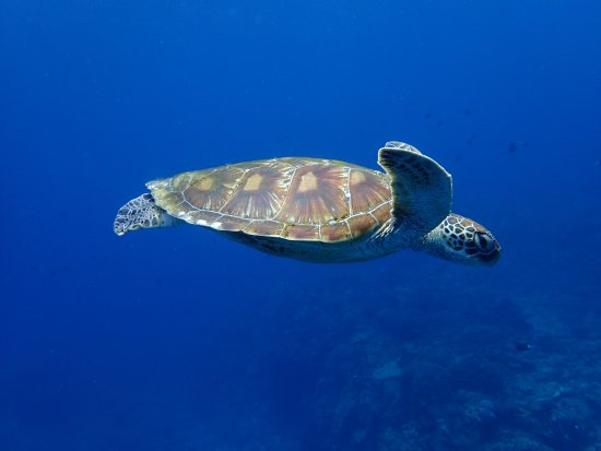 Kadena-cho, Japón: Slowly  and relax turtles