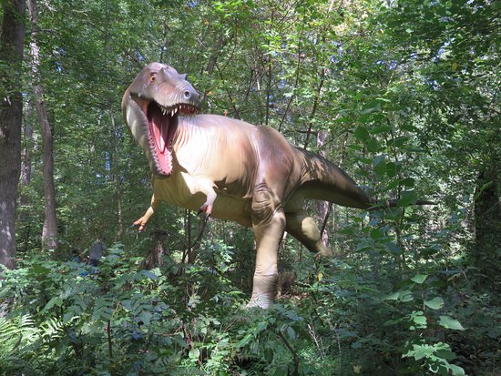 Museum of Life + Science: The Albertosauras looks like it's coming at you.