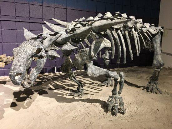 Price, UT: Utah State University Eastern Prehistoric Museum