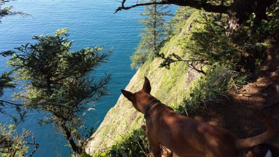Cape Lookout State Park: Long way down.