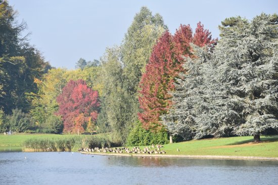 Tervuren, Bélgica: The beautiful colors of the trees, it will only be there for a few weeks