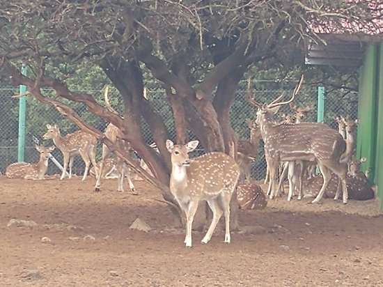 Merom Golan: Bambi and its family