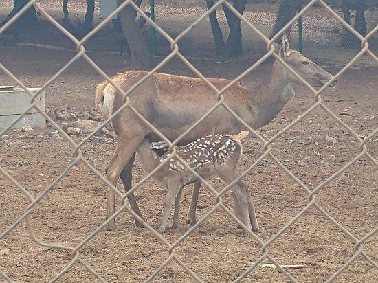 Merom Golan: Bambi lunch timee