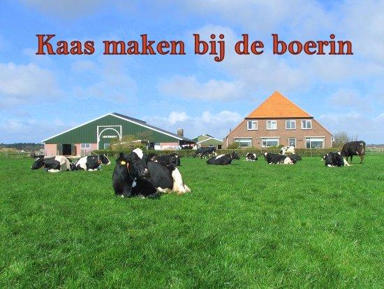 Kaas maken bij de Boerin