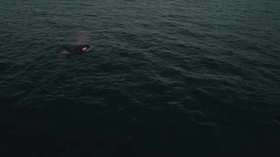 Black Creek, Kanada: Orca drone shot