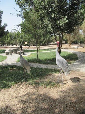 Arman Zoo - Jasra
