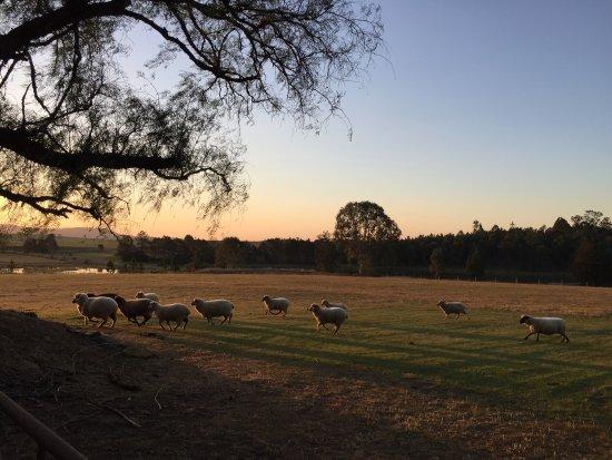 Beaudesert, Australia: photo6.jpg