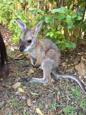 Beaudesert, Australia: photo7.jpg
