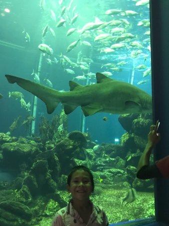 Tokai University Marine Science Museum: photo1.jpg