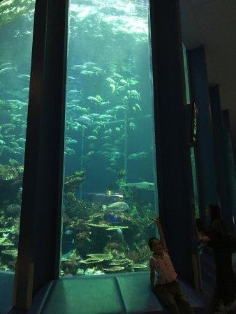 Tokai University Marine Science Museum: photo2.jpg